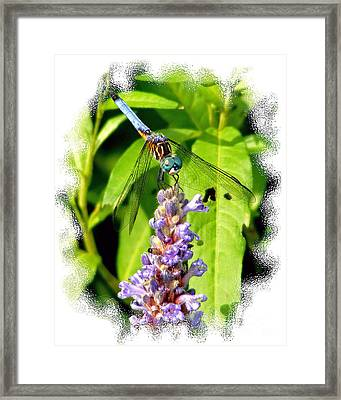 Framed Print featuring the photograph  Blue Dragonfly by Lila Fisher-Wenzel
