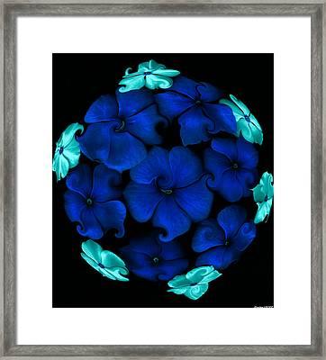 Blue Vinca  Framed Print by Evelyn Patrick