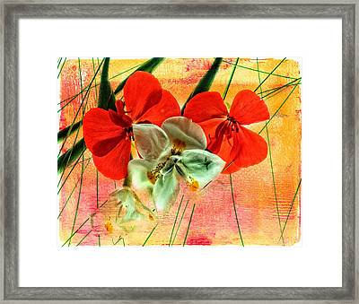 Bougainvillea And Paper White Framed Print