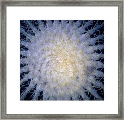 Cactus Nr1 Framed Print