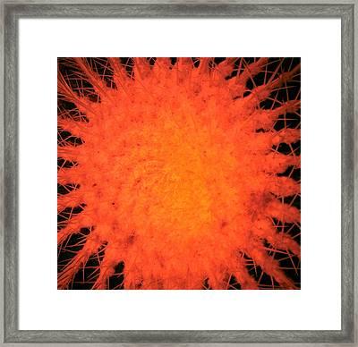 Cactus Nr6 Framed Print
