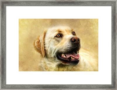Cass Framed Print by Trudi Simmonds