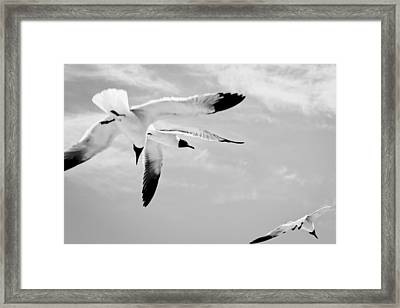 Chaos - Seagulls Black And White Framed Print by Colleen Kammerer