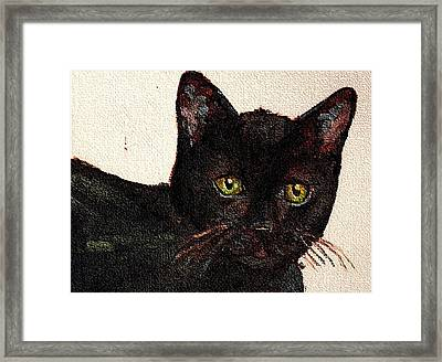 Chat Noir Portrait Black Bombay Cat  No. 2 Framed Print by Cecely Bloom