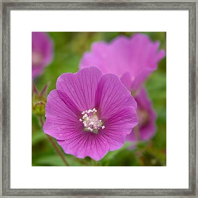 Crested Anoda Framed Print