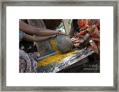 Crushing Turmeric Roots To Powder Framed Print by Tim Gainey