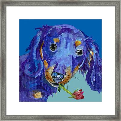 Dach Framed Print by Pat Saunders-White