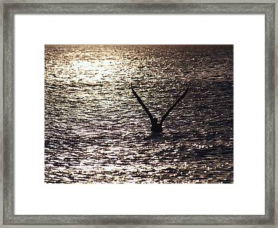 Dancing With The Wind On A Sparkling Water Framed Print