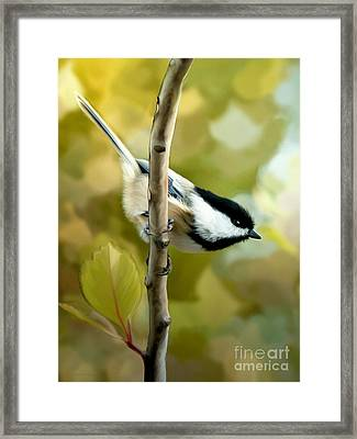 Day Dreams Framed Print by Beve Brown-Clark Photography