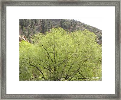 Tree Ute Pass Hwy 24 Cos Co Framed Print