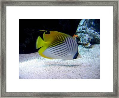 Fish Framed Print by Suhas Tavkar