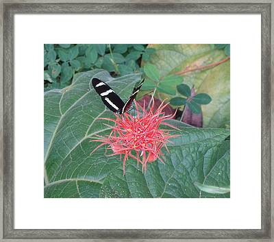 Floral No.3 Framed Print by Gregory Young