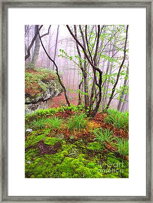 Foggy Spring Morning Framed Print
