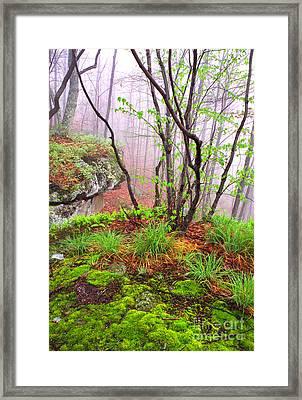 Foggy Spring Morning Framed Print by Thomas R Fletcher