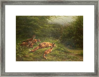 Foxes Waiting For The Prey   Framed Print