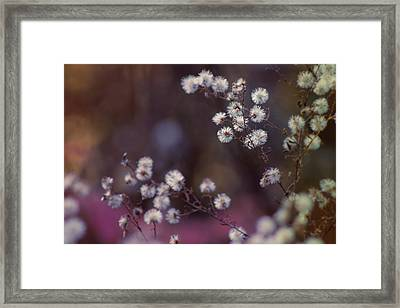 Fuzzy Fall  Framed Print by Bulik Elena