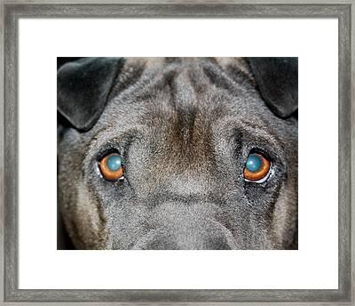 Gandalfs Eyes Framed Print by Terry Fleckney
