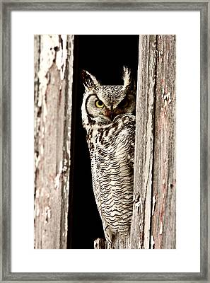 Great Horned Owl Perched In Barn Window Framed Print