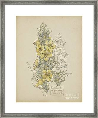 Great Mullein Framed Print by Celestial Images