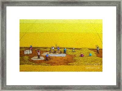 Harvest 17 Framed Print by Sri Martha