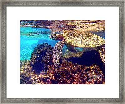 Honu On The Reef Framed Print