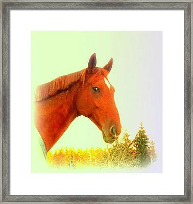 When A Horse Tries To Tell You Something You Should Listen  Framed Print
