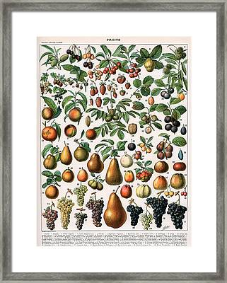 Illustration Of Fruit Varieties Framed Print