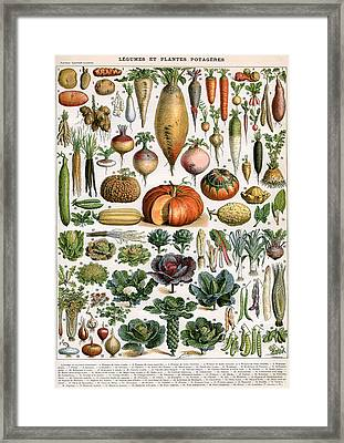 Illustration Of Vegetable Varieties Framed Print