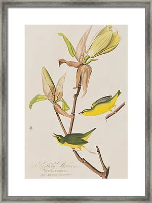 Kentucky Warbler Framed Print by John James Audubon