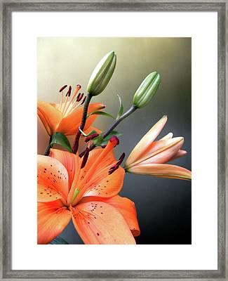 Lilies 2 Framed Print