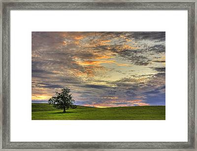 Lonley Tree Framed Print by Matt Champlin
