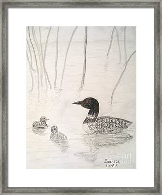 Loon Float Framed Print by Sandra Lunde