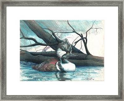 Merganser Duck Framed Print by Raymond Doward