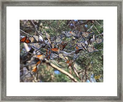 Monarch Mixed Cluster Framed Print