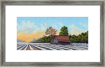 Montmorenci Cottonfield Framed Print