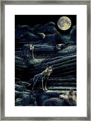 Moonlit Wolf Pack Framed Print by Mal Bray