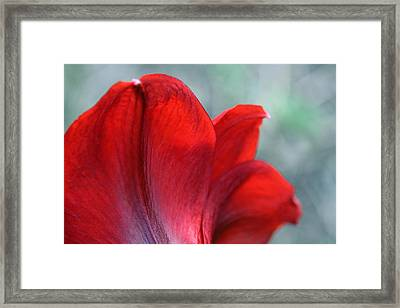 Mprints - Perfect Petal Framed Print by M  Stuart