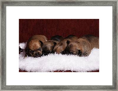Never Long Enough Framed Print by Monte Arnold
