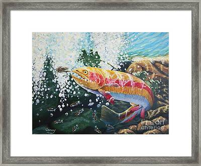 Not Your Average Goldfish Framed Print by Carey MacDonald