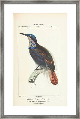 Nouvelle Guinee Framed Print by MotionAge Designs