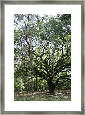 Oak Sentinel Framed Print