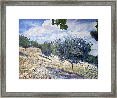 Olive Grove At Monte Cardeto Lazio Italy 2009  Framed Print by Enver Larney