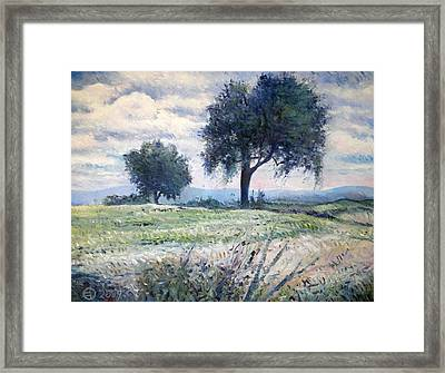 Olive Trees At Monte Cardeto Italy 2009  Framed Print by Enver Larney