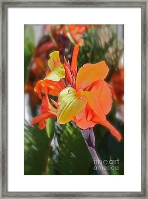 Orange Bright Framed Print by Maureen J Haldeman