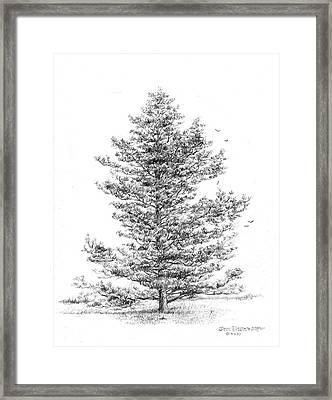 Pine Framed Print by Jim Hubbard