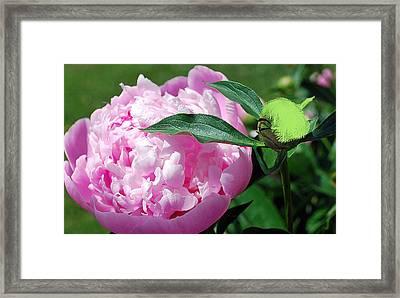 Pixie Gardener Framed Print
