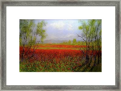 Poppie Morning 2 Framed Print