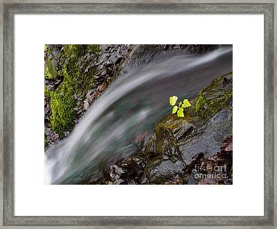 River Framed Print by Odon Czintos
