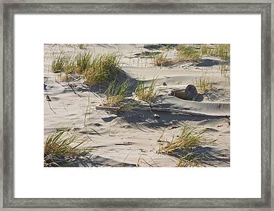 Sand And Driftwood Popham Beach Maine Framed Print