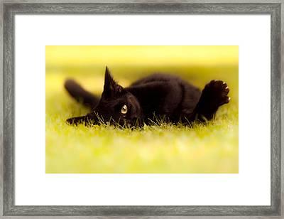 ' See You  Framed Print by Bulik Elena